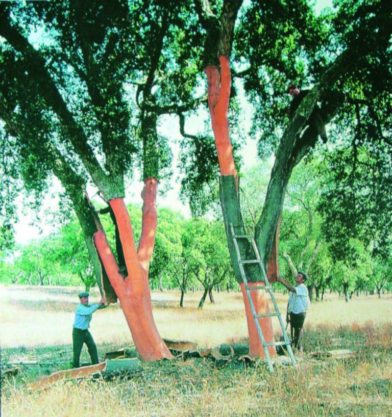 大きな木と男性